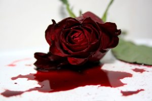 the-dying-rose-1