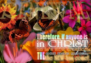 new creation butterflies