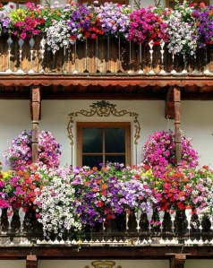 spanish-flowers-4